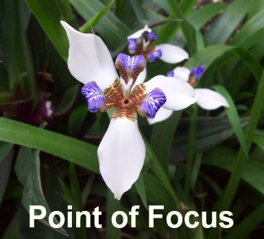 Iris Point of Focus square
