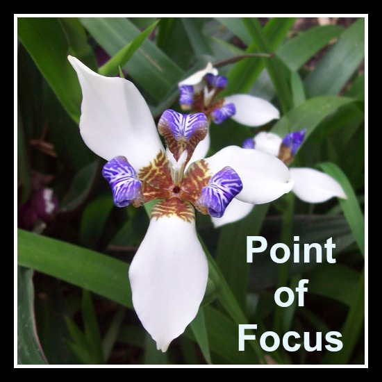 Point of Focus